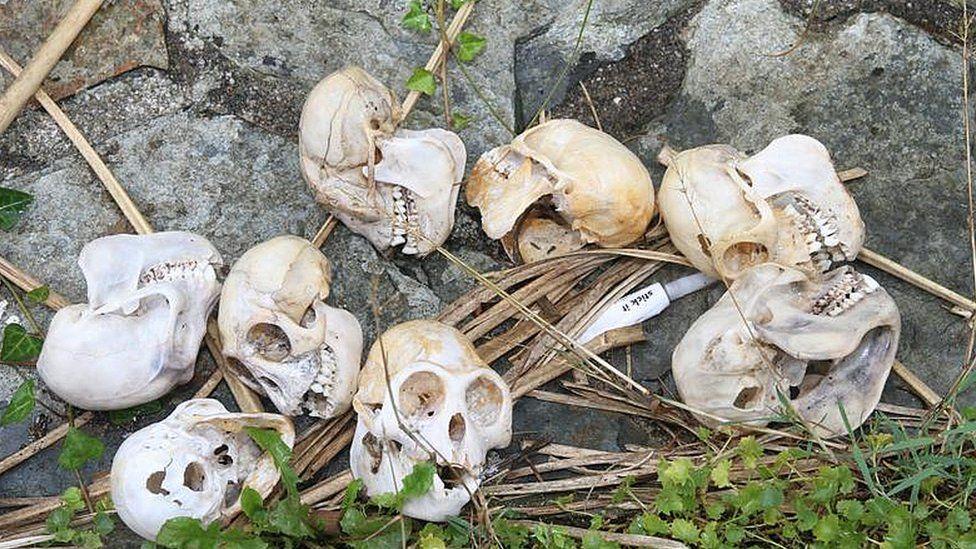 Monkey skulls found in Devon police raid