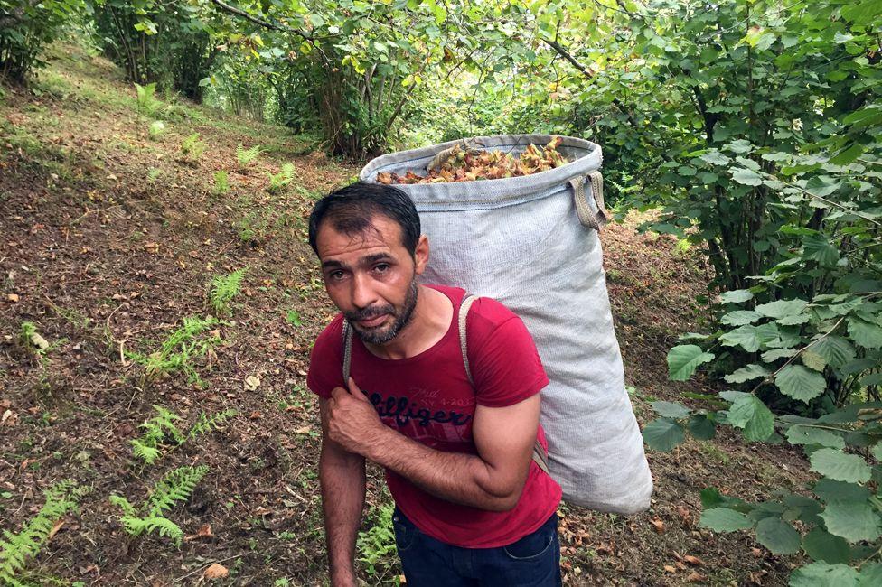 Mehmet Kelekci, work organiser and hazelnut picker