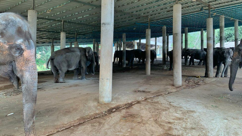 Elephant trekking camp in Chiang Mai province