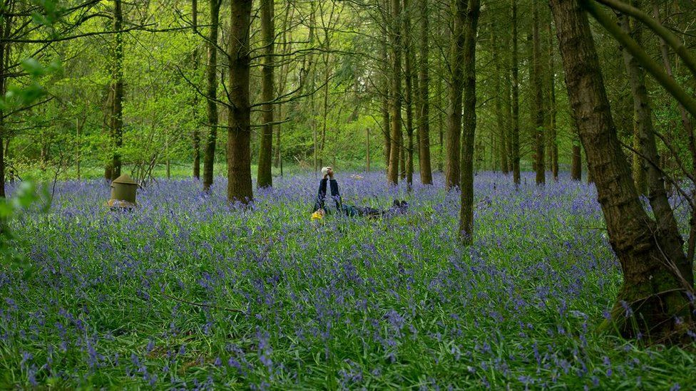 Michal in a bluebell wood in Chippenham, Wiltshire