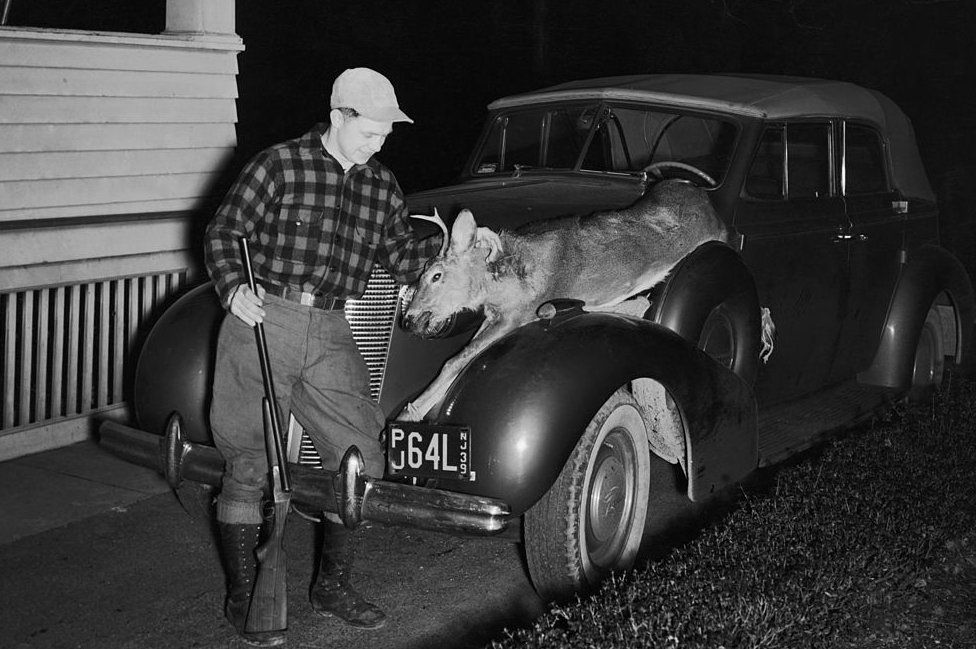 A hunter returns home with a deer on his car in 1940