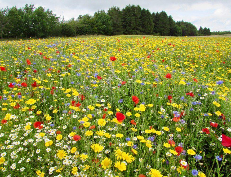 Wild flowers in a field