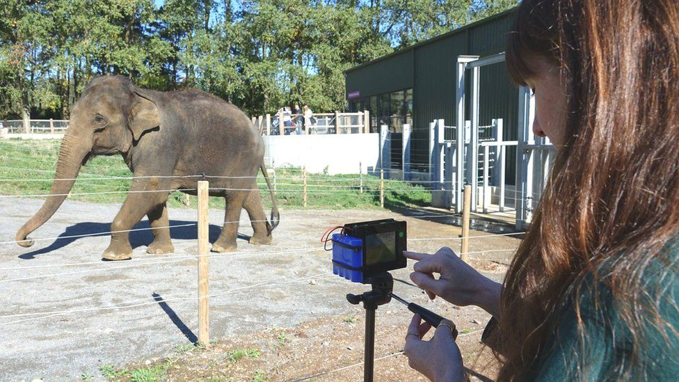 Thermal camera in operation at ZSL Whipsnade Zoo