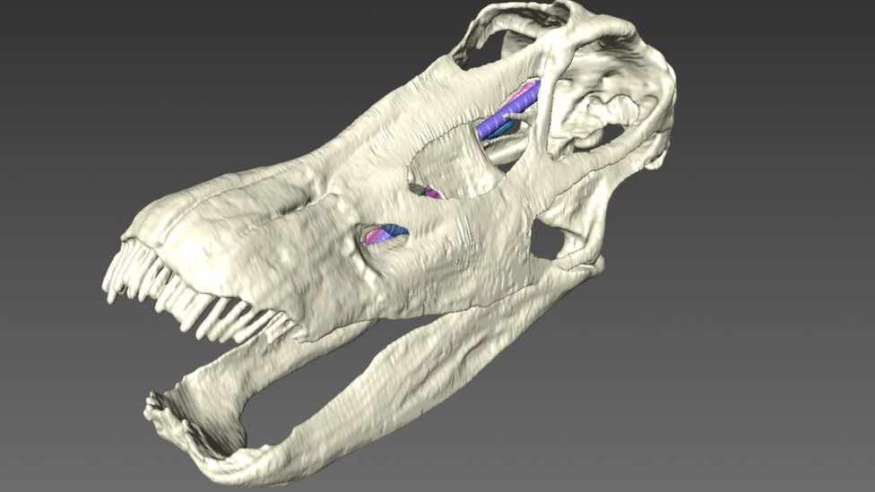3D scan of diplodocus skull (c) Bristol University