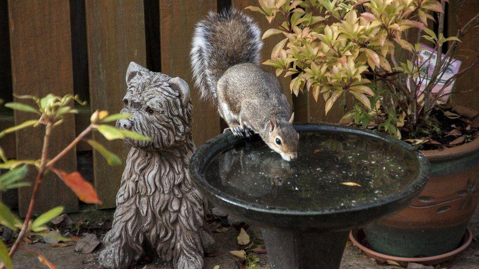 Squirrel drinking beside dog statue