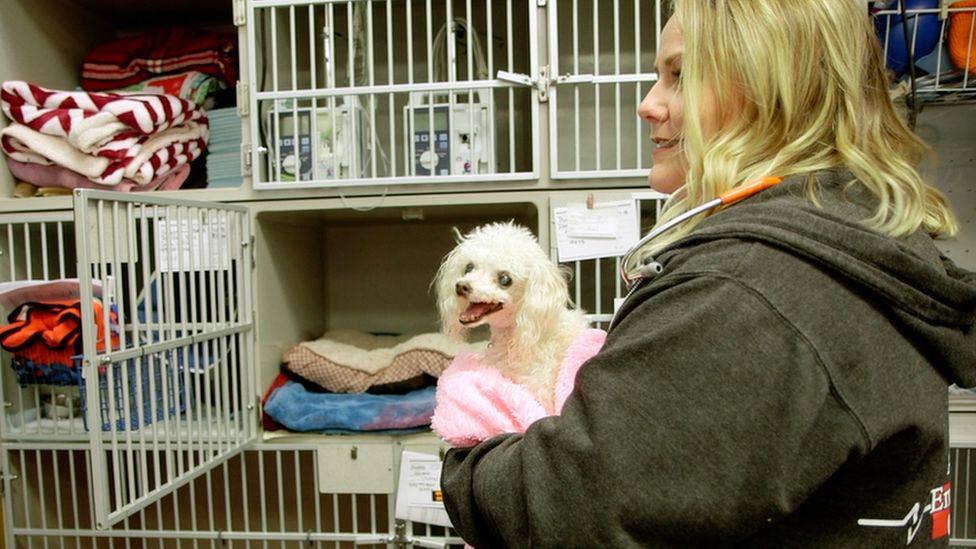 Chelsea Herndon works as a vet tech
