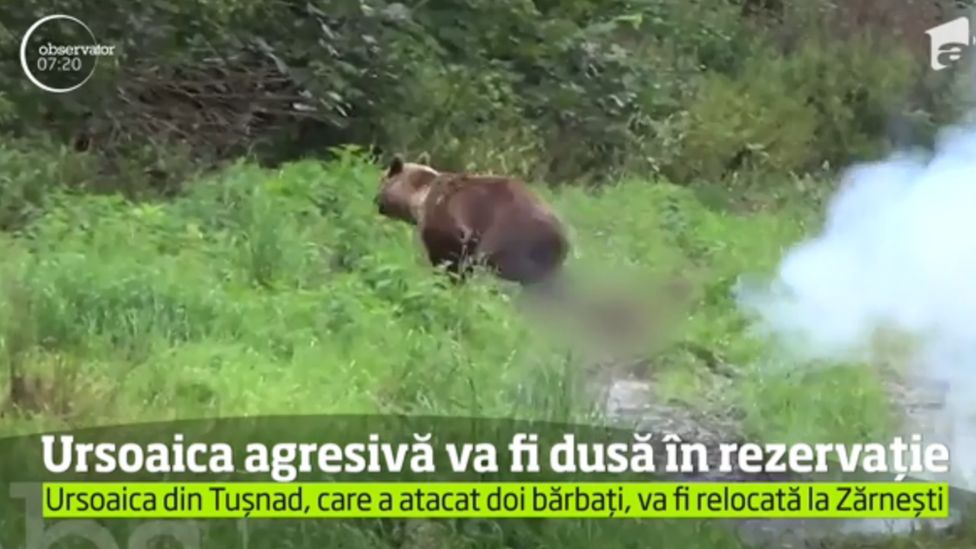 Romanian hunters drive a bear away from a youth camp, July 2018