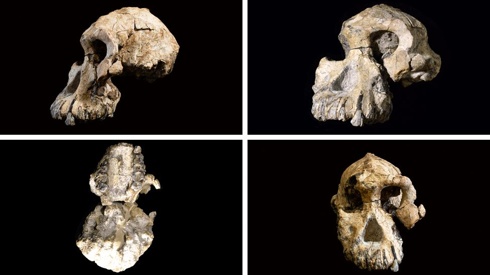 Four views on the nearly complete skull