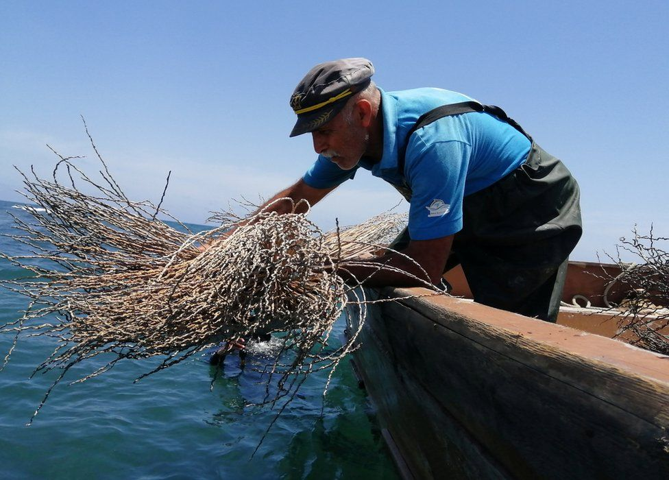 A man lowers objects into the water from a boat.