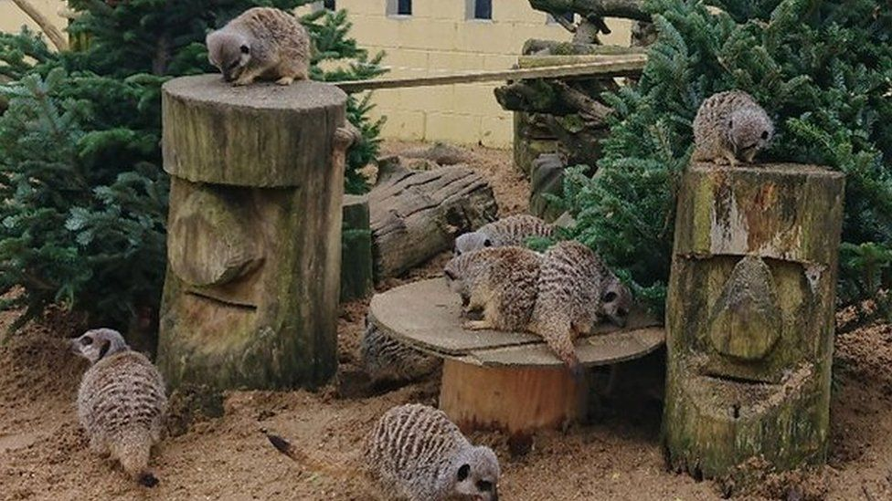 Meerkats at the owl sanctuary