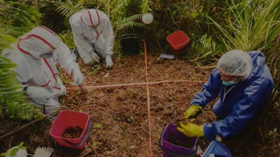 Site where Grace Millane's body was found