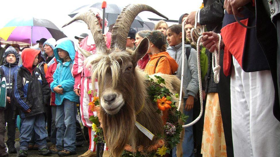 Deidesheim's Billy Goat Auction, Germany