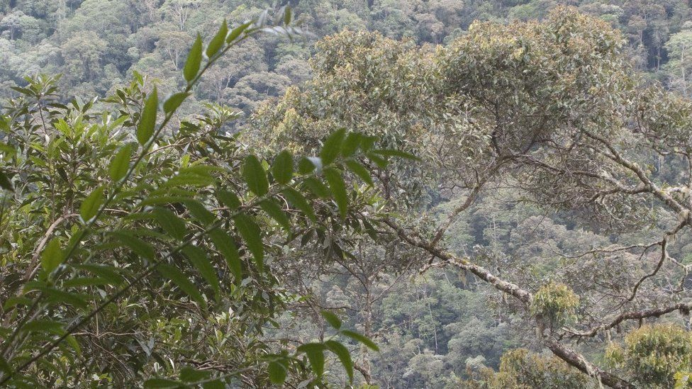 Mountain forest of Sulawesi, where some of the new species have been found