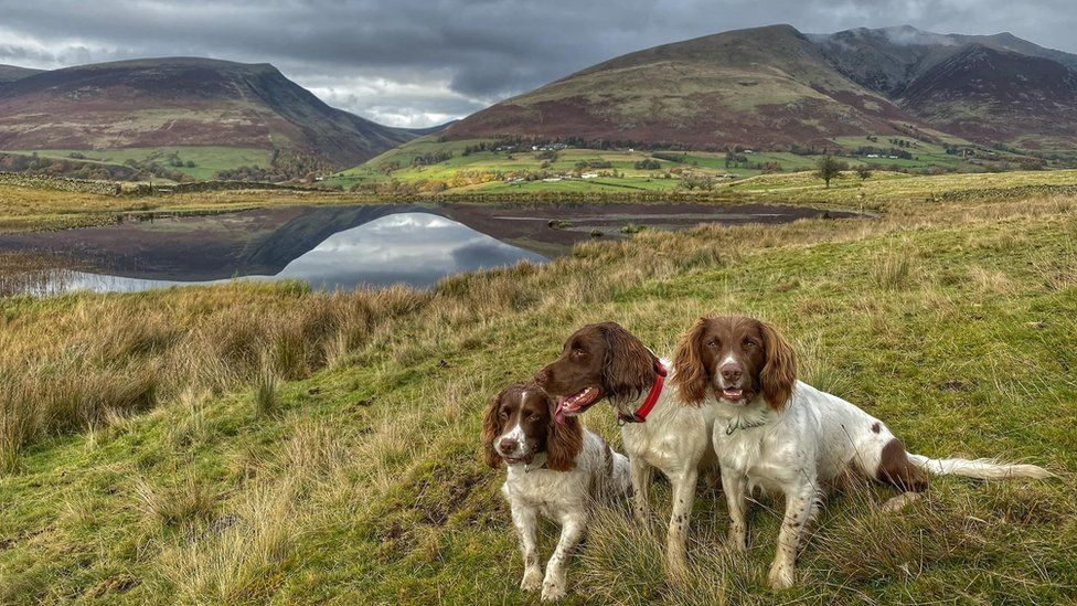 The dogs sit beside Tewitt Tarn