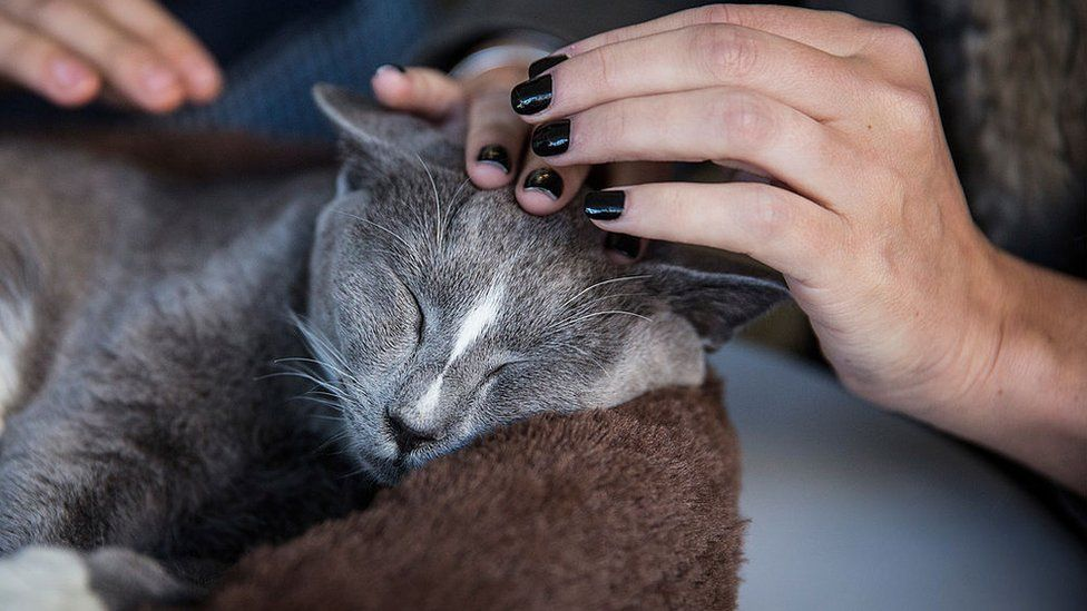 Cat being scratched