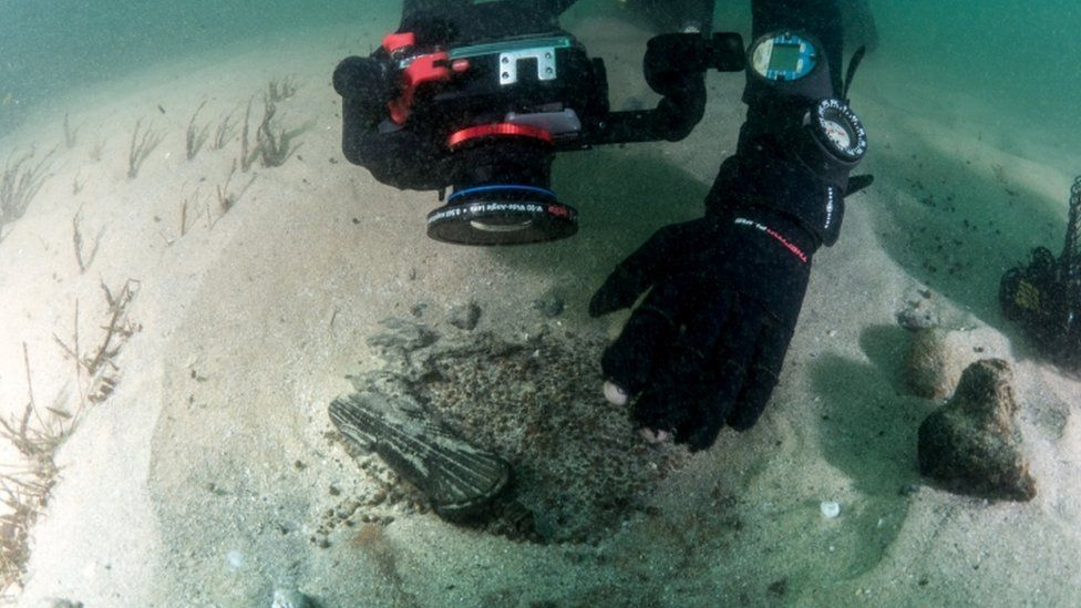 A diver works at the scene of a centuries-old shipwreck near Portugal