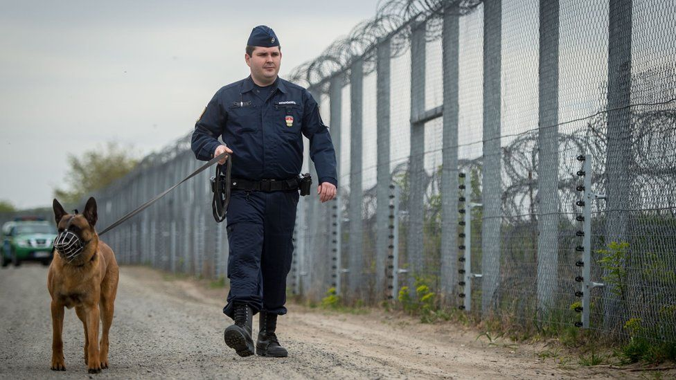 A police officer with a dog patrols along the border fence on the Hungarian-Serbian border near Roszke