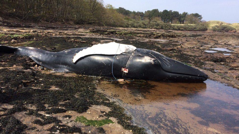 Humpback whale Pic: John Easton