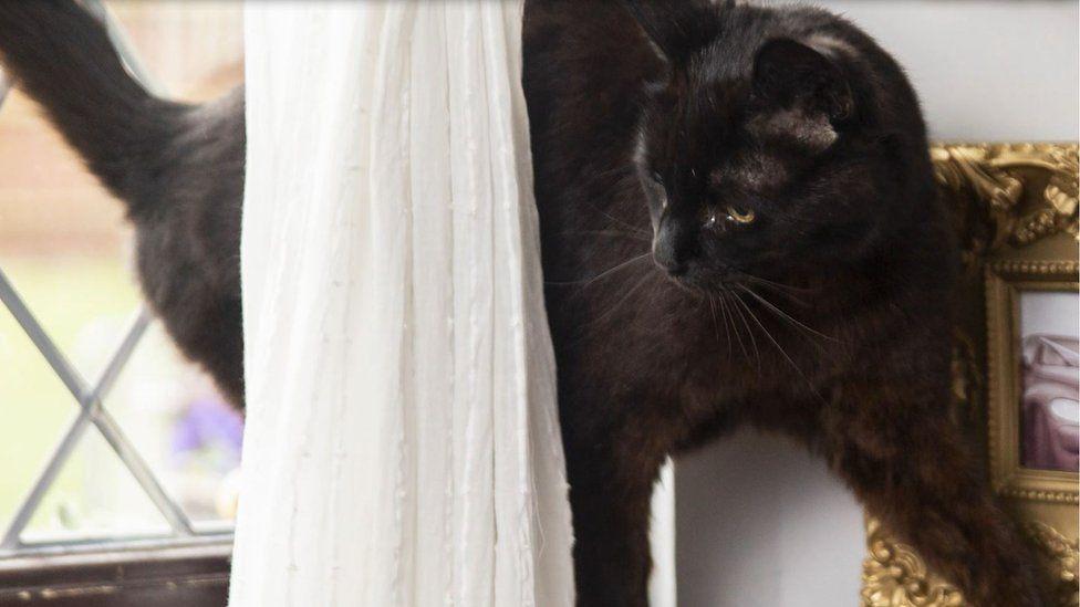 Finn's cat Jeffree