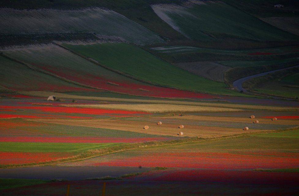 A view of fields of flowers in Castelluccio di Norcia near Perugia, Italy