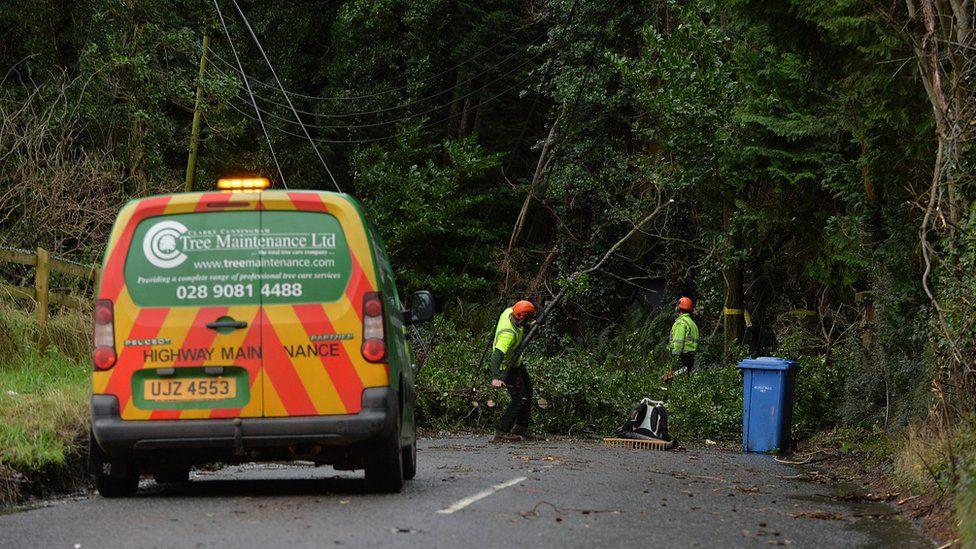 Fallen trees Dundonald