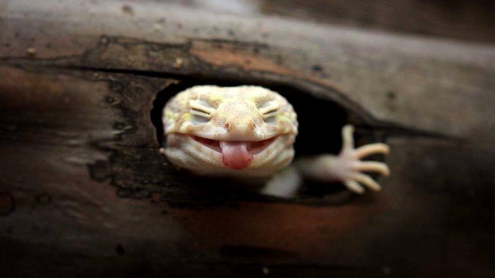 El fotógrafo que capta las expresiones más divertidas de los animales