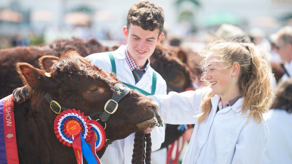 Two people stroking a cow with a rosette across its side cheek
