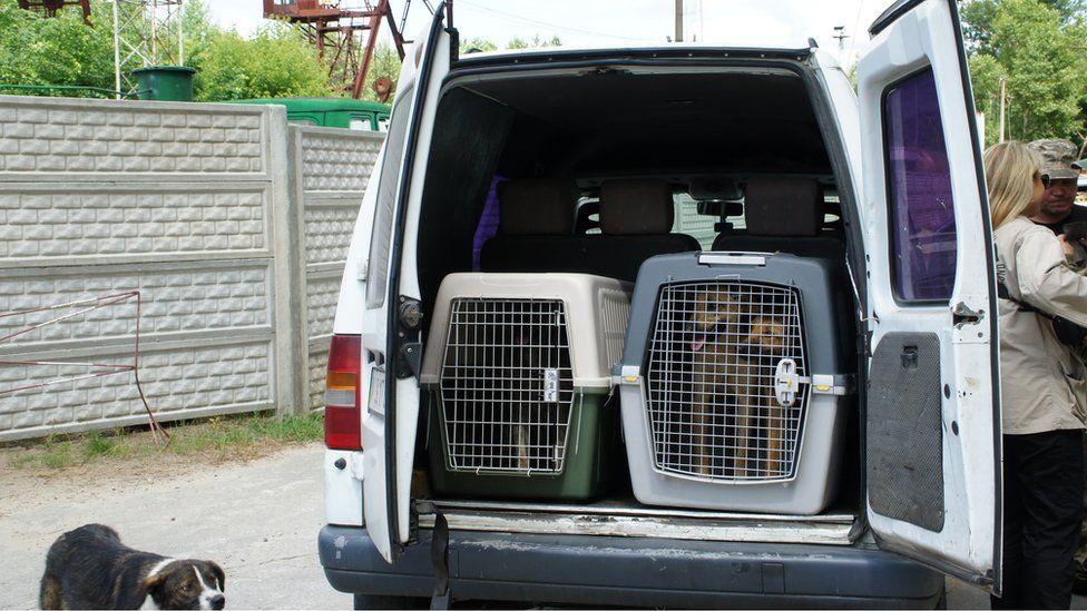 Собака в клітці