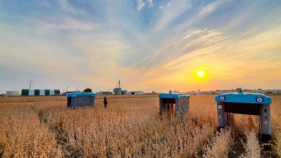 A photograph of a field at sunset shows three bridge-shaped robots - a central bar suspended by two pillars - drive over rows of crops