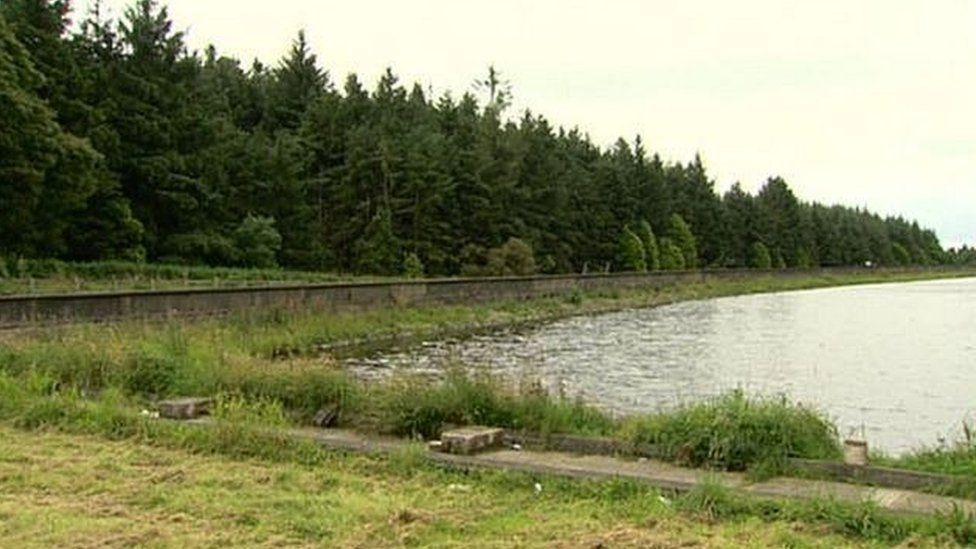 Woodburn Forest, near Carrickfergus, is one of the forests covered by the consultation