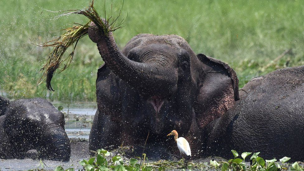A wild elephant in a wetlands area