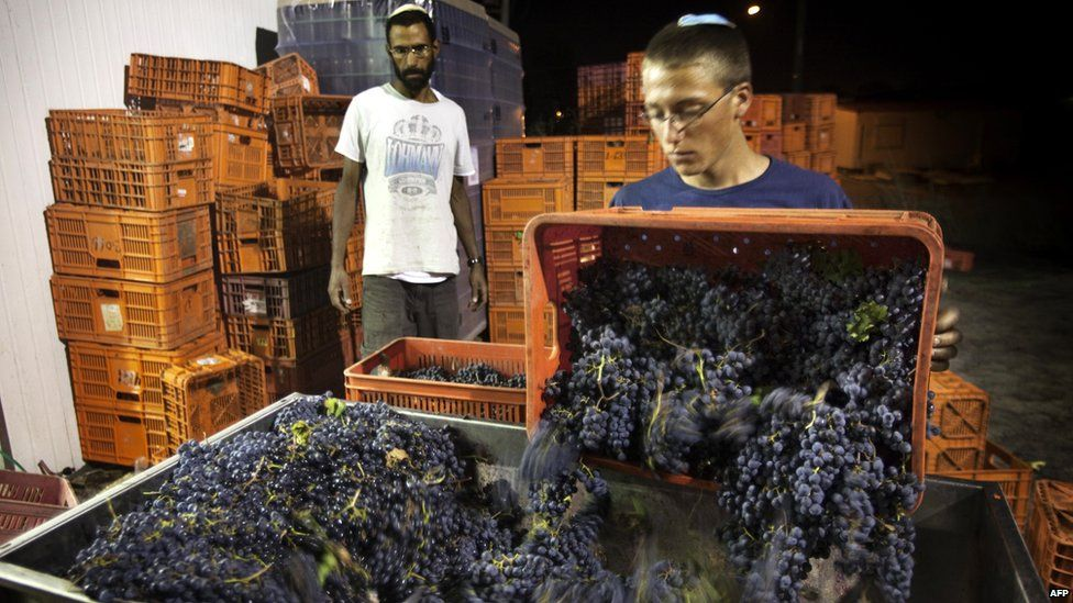 A worker at the Jewish settlement of Ofra processes harvested grapes (file photo)