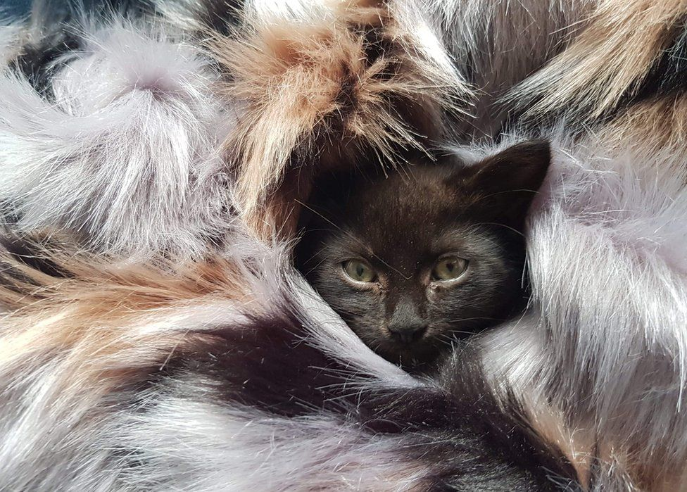 A cat wrapped in a furry blanket