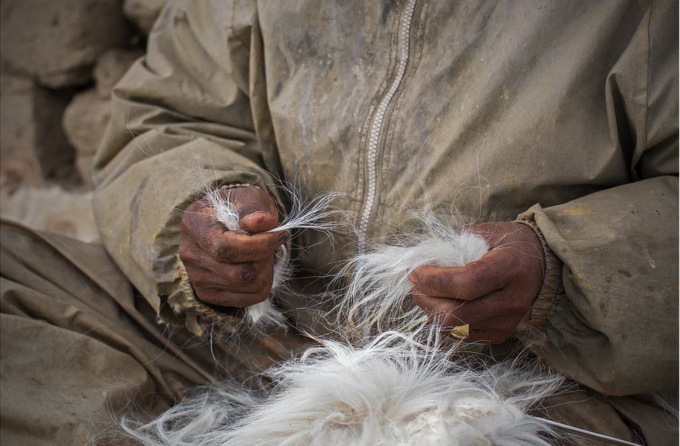 A shepherd holds goat hair
