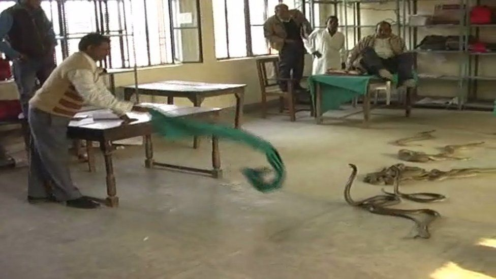 Snake charmer Hakkul dumped dozens of snakes in a government office