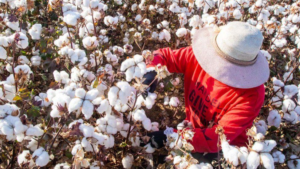 Cotton production in Xinjiang