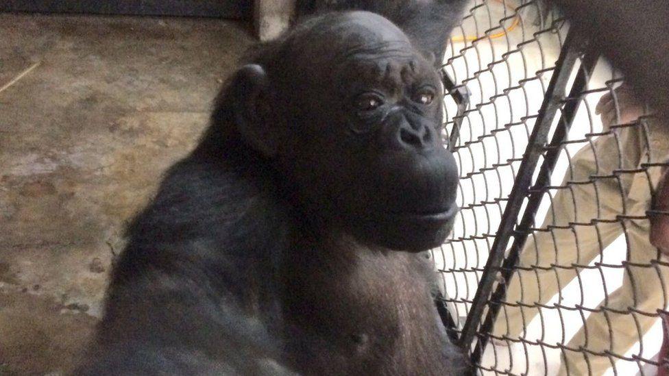 Rita in her enclosure