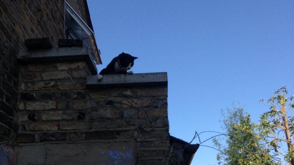 Bones peeps over the chimney ledge