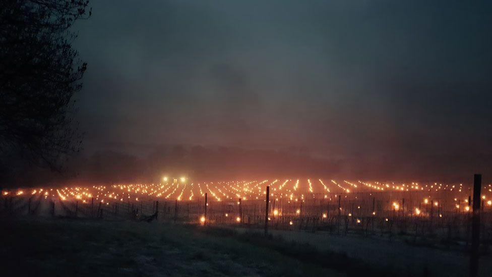 The Albury Vineyard