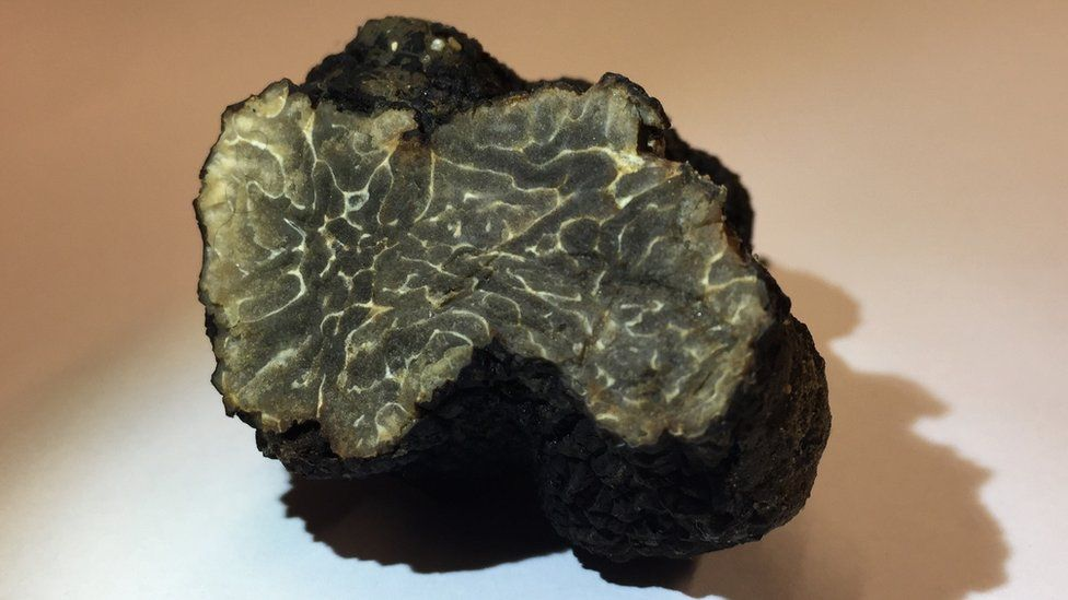 The 21g truffle found on a Paris hotel roof