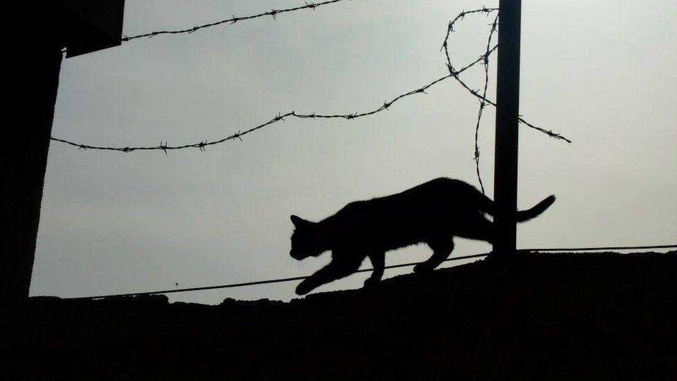 A cat walks along a wall