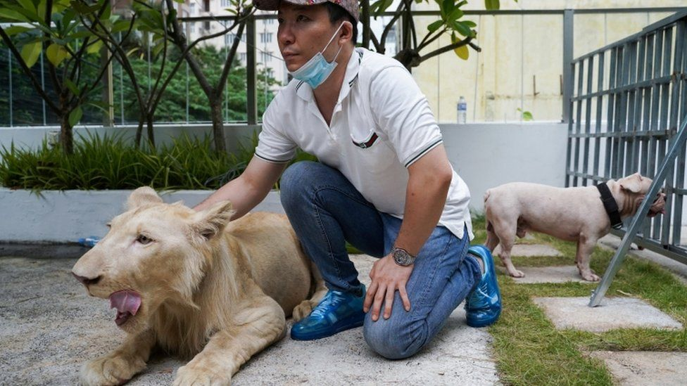A confiscated pet lion poses with its owner in Cambodia