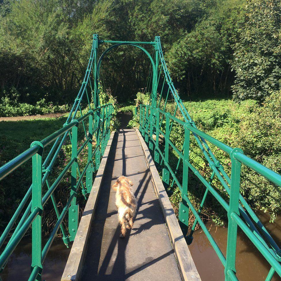 A dog walking along a bridge
