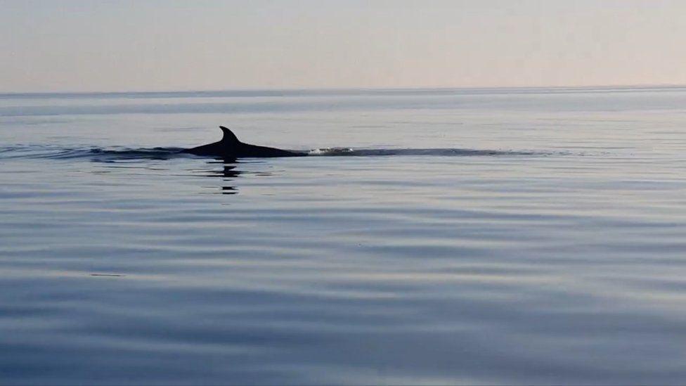 A whale fin
