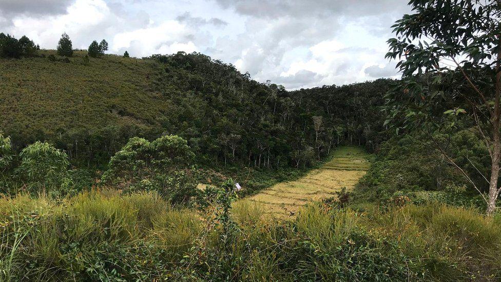 Forest and farmland in Mangabe