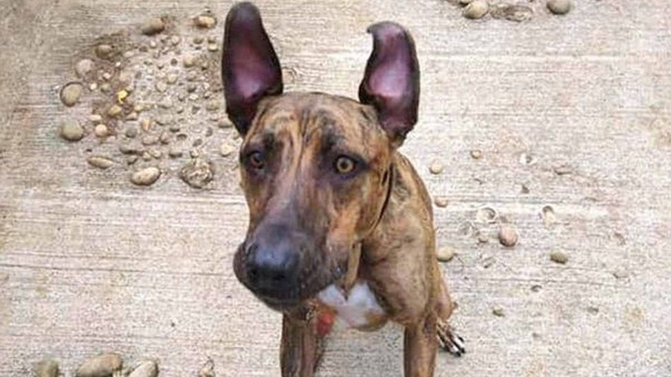 Sue the lurcher looking for a new home