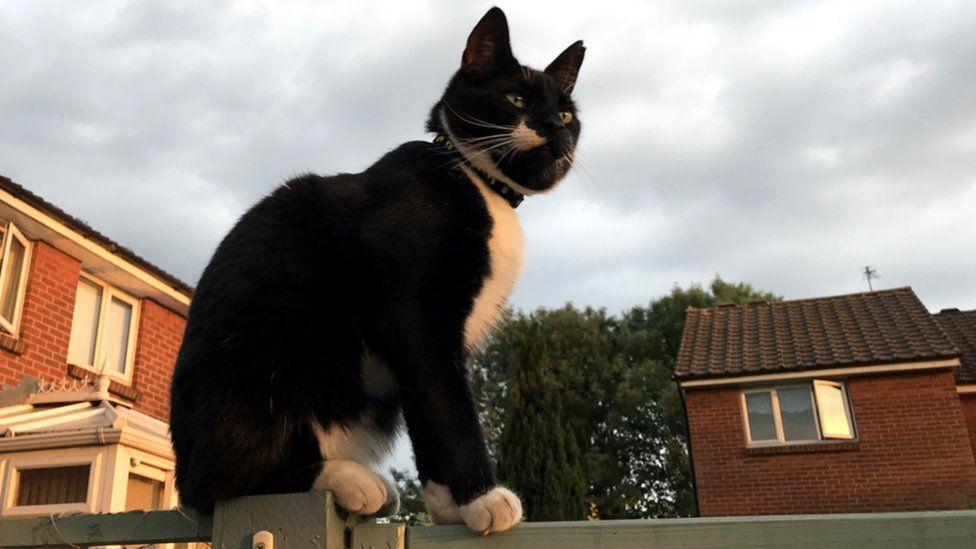 Cat on a fence (c) Jason Palmer