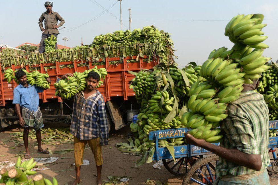 Indian vendor carry bunches of bananas at a wholesale market in Chennai on February 1, 2019.