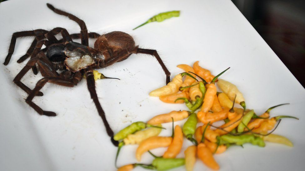 Spider on a plate