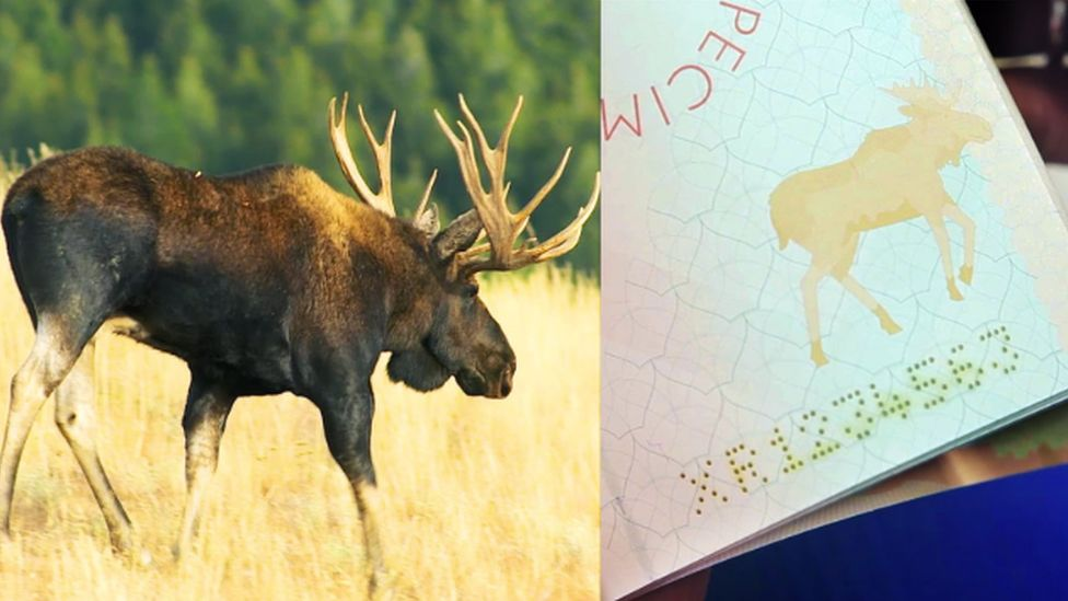 Elk watermark on Finnish passport